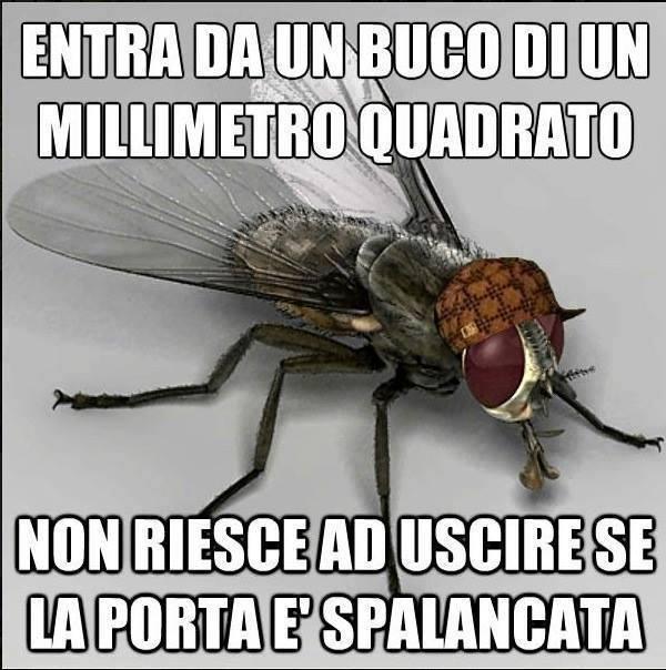 La mosca cazzate sul serio - Su di esso si esce da una porta finestra ...